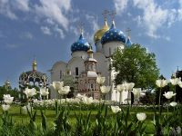 White tulips in Cathedral Square - Holy Trinity St. Sergius Lavra