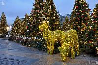 Lighted Deer Family and Christmas Trees on Manezhnaya Square