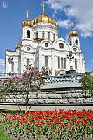 Cathedral of Christ the Savior Framed by Flowers in Spring