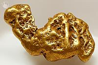 Camel Gold Nugget