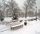 After Heavy Snowfall in the park of Repin
