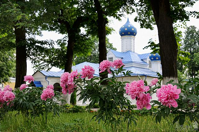 Pink Peony Flowers in St.Theodore Convent