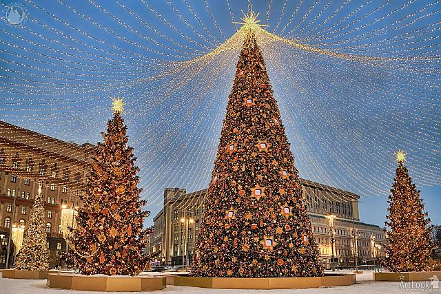 Christmas Trees Under Canopy of Lights at Lubyanka in Twilight