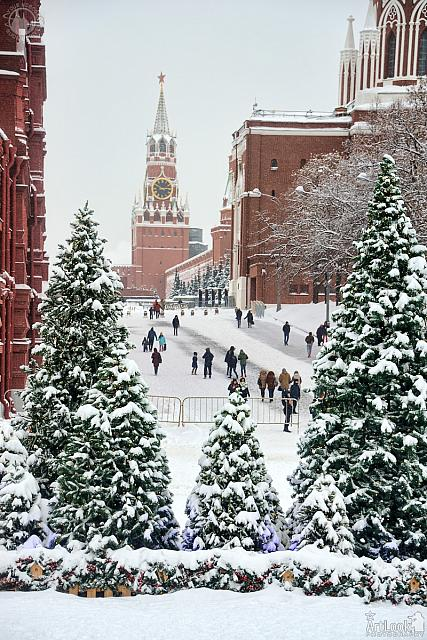 Kremlin Towers Framed by Christmas Trees in Snow