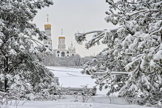 Covered Snow Spruce Trees and Ivan the Great Bell Tower