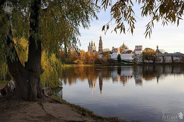 Novodevichy Convent Framed by Tree in Golden Autumn Evening