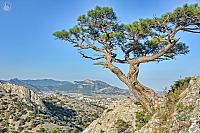 Stankevich Pine Tree and Sudak Valley