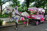 Magic Carriage for Princess