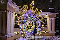 Amazing Illuminated Peacock at the Entrance to the Moscow Zoo