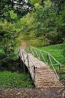 Small Birch Bridge on a Path